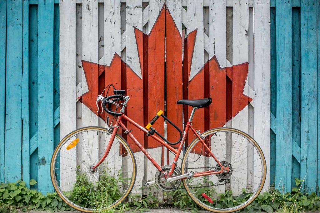 Oak Tree Immigration Canada maple leaf on wall